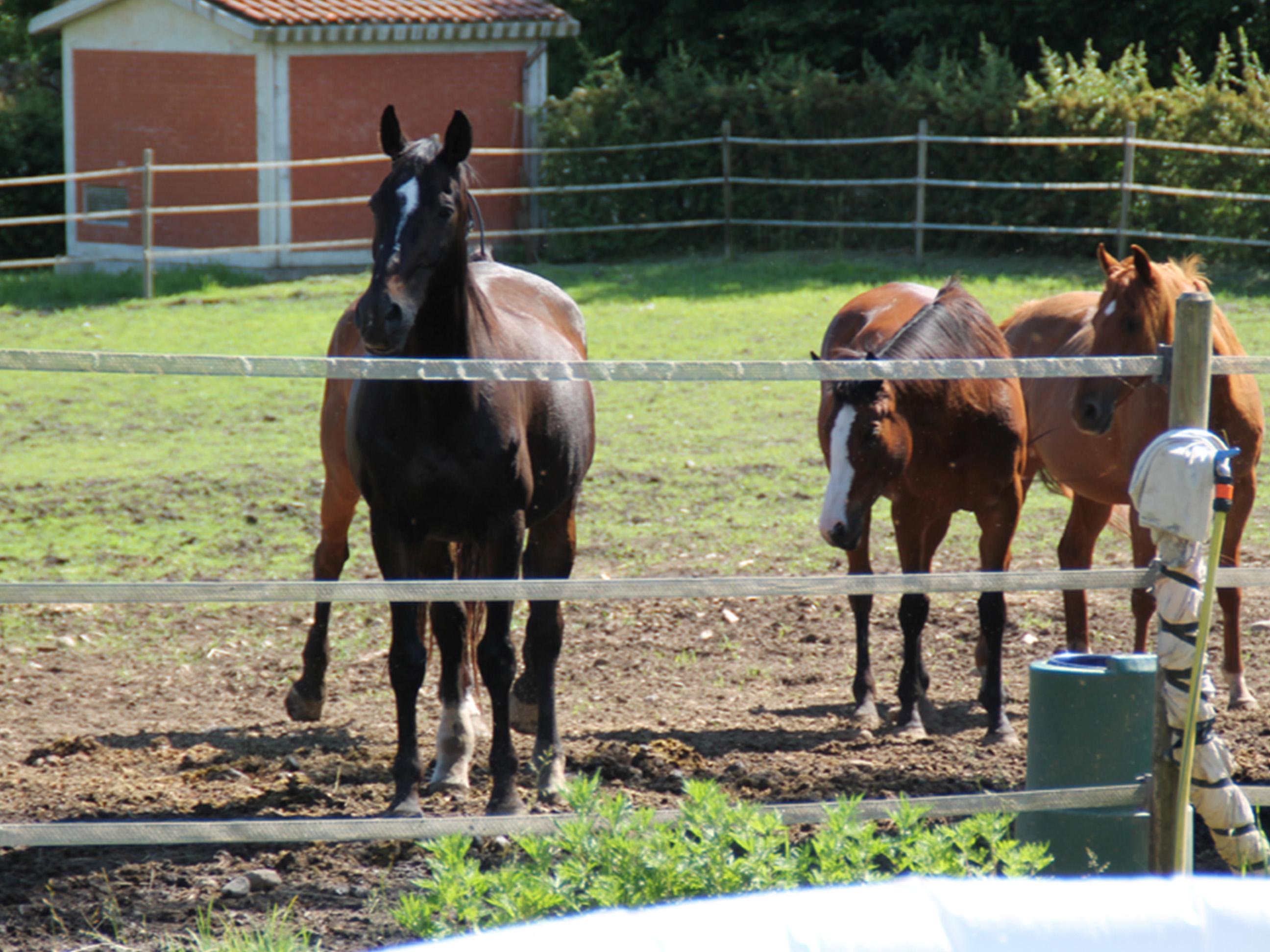 scuola_equitazione_pony_centro_ippico_la_fonda_varese_0007_630