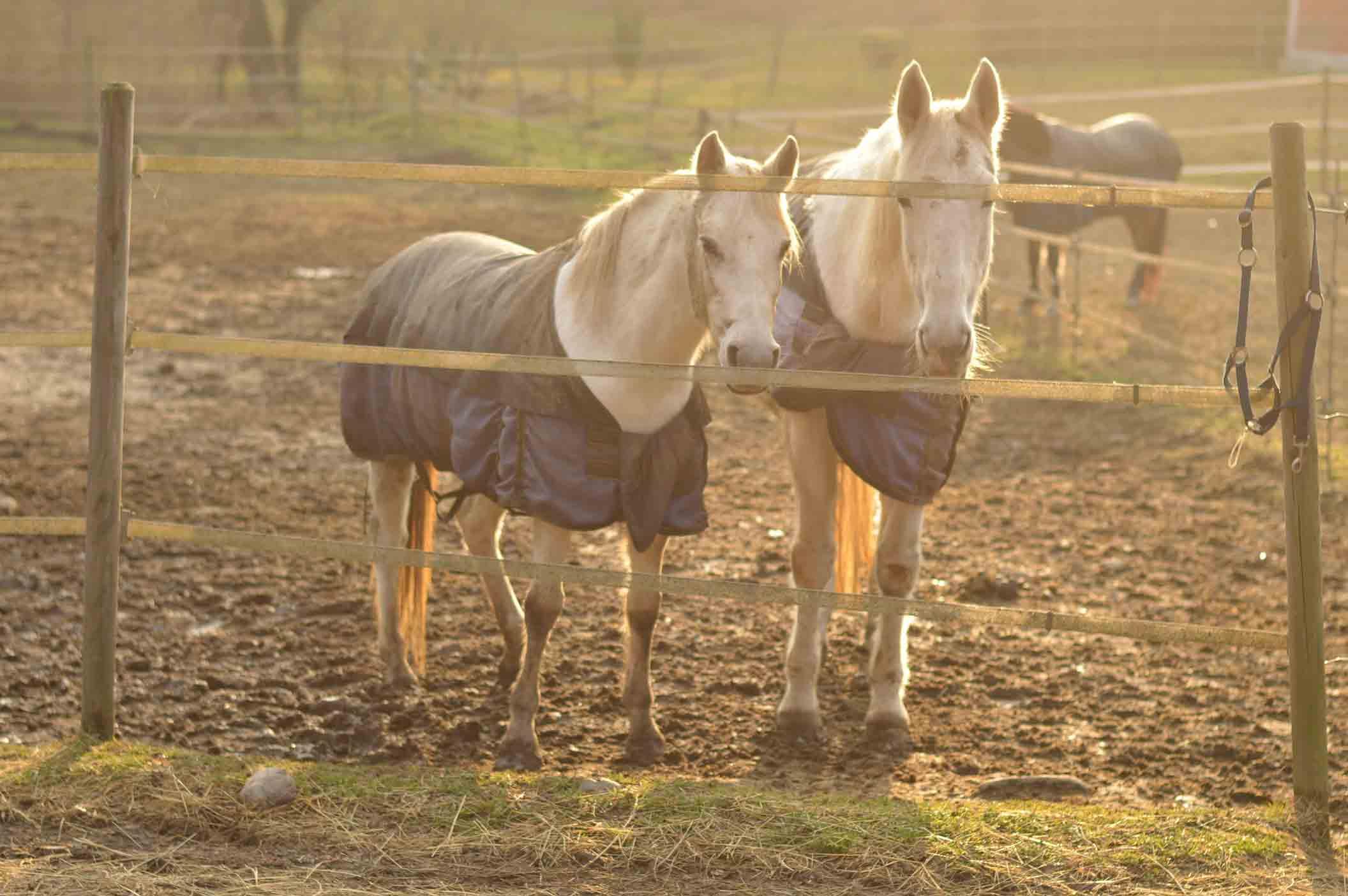 pensione cavalli centro ippico la fonda