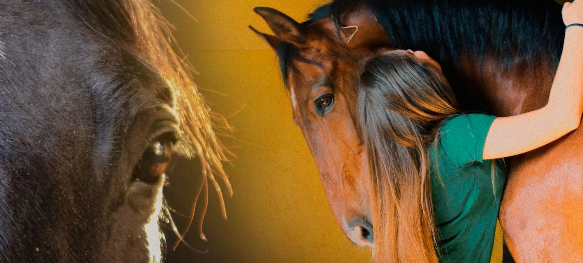 centro ippico la fonda cavalli